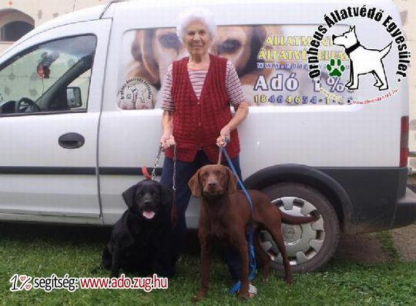Állatbarátok adóegyszázalék felajánlásának köszönhetően megmentettük Daisyt és Csokit