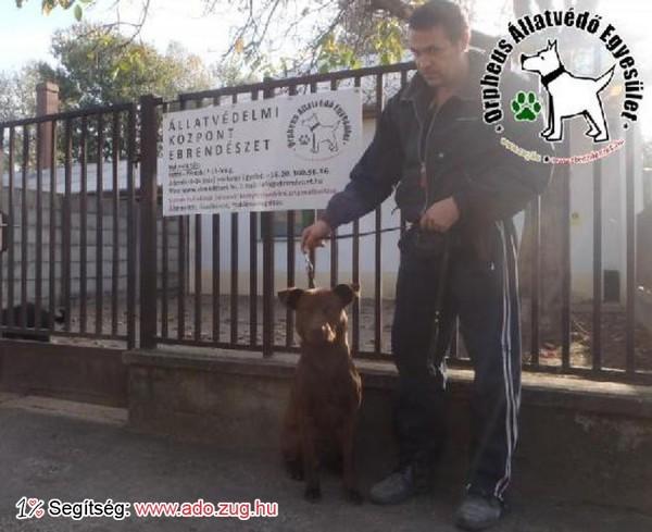 Állatmentés: Szerető Gazdinál Petya!