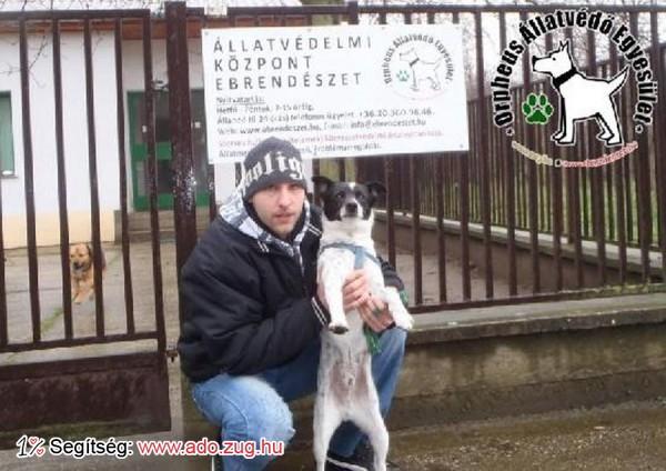 Állatmentés: Szerető Gazdinál Rudi!