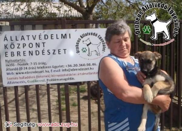 Állatmentés: Titi Gazdihoz került