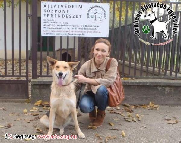 Kutyamentés: Mancska szerető Gazdinál!