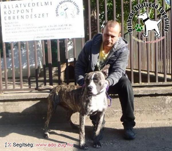 Kutyamentés: Megmentettük Rocky-t!