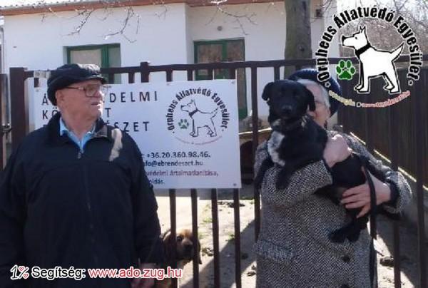 Kutyamentés: Sada Gazdihoz került!