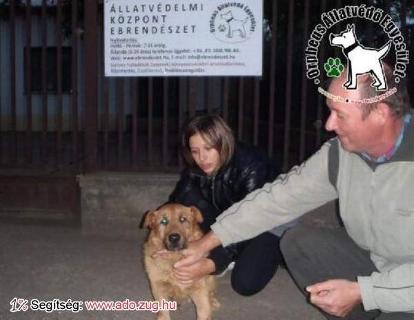 Kutyamentés: Zsömit megmentettük!