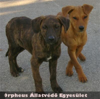 Adó1% forintokból menekült meg ez a két kiskutya, az Orpheus Állatvédõ Egyesület telepén