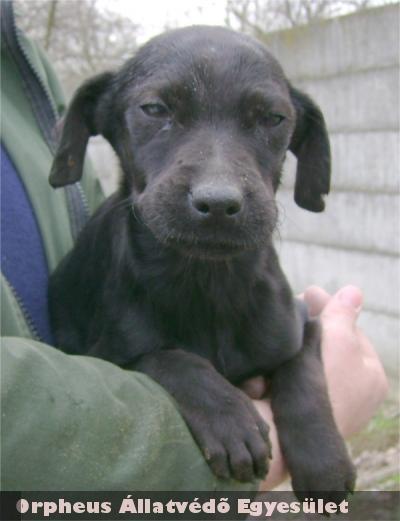 Állatbarátok Adó1%-nak köszönhetõen Fruzsit megmentette az Orpheus Állatvédõ Egyesület és gazdit keresett neki