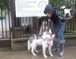 Kutyamentés: Dzsenit megmentettük!