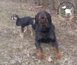 Állatbarátok adóegyszázalék felajánlásának köszönhetően megmentettük Grout és Májlót!