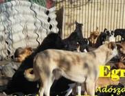 Állatokat Védjük Együtt Alapítvány