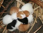 Belfegor és Maci Állatmenhely Alapítvány