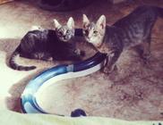 Macskavilág Alapítvány