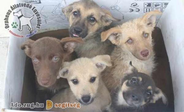 Kutyamentés támogatás - szja 1% felajánlás