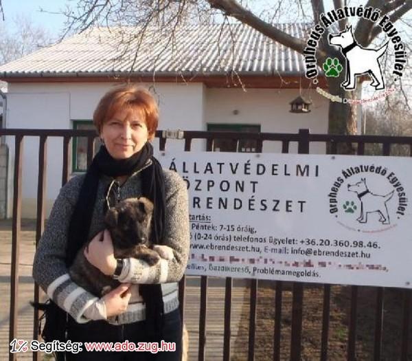 Állatmentés: Szerető Gazdihoz került Csatika