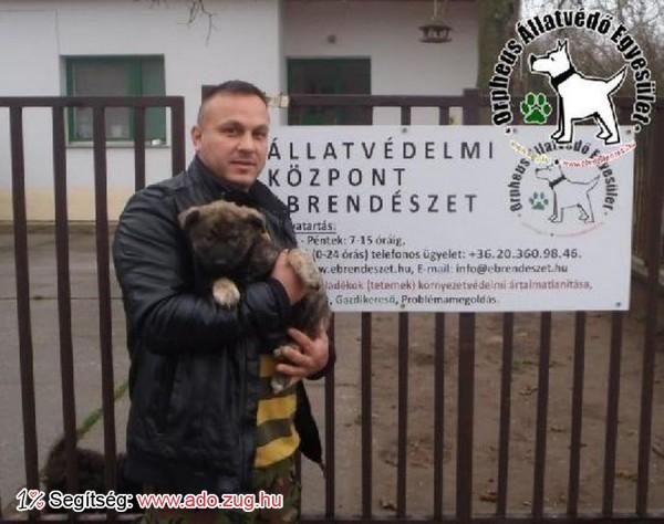 Szerető Gazdinál Kanna, az állatbarátok adóegyszázalék felajánlásának köszönhetően