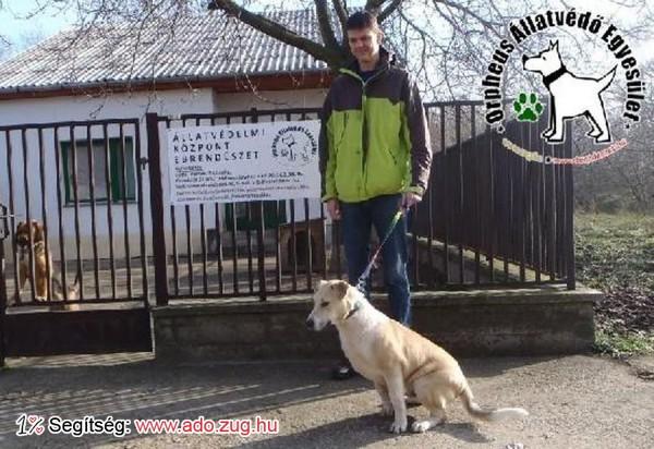 Állatmentés: Zebra Gazdihoz került!