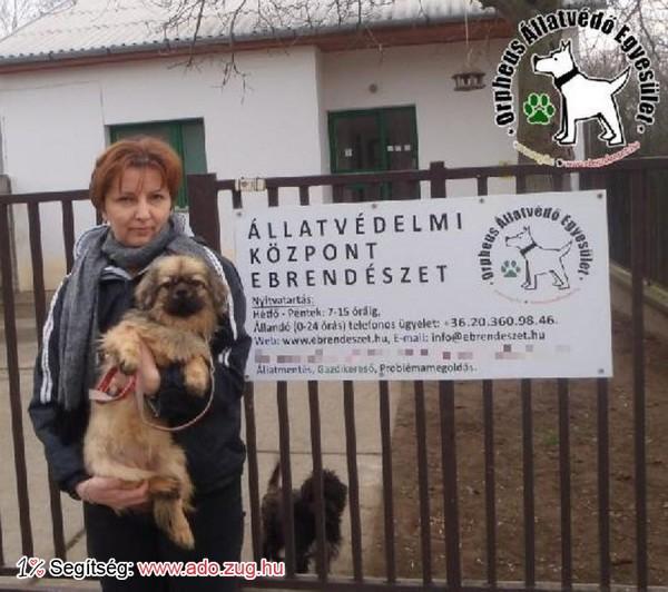 Kutyamentés: Sólyom az adó 1% felajánlásoknak köszönhetően Gazdihoz került!