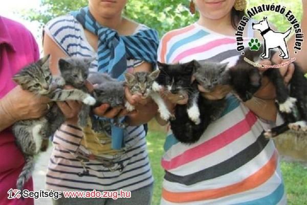 Macskamentés: A cicák Gazdihoz kerültek!