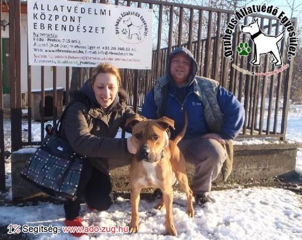 Megmentettük Safe Kutyust!